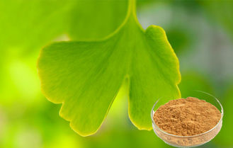Pharmaceutical Grade Ginkgo Leaf Powder , CONBA Ginkgo Biloba Extract