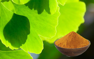 Pure Ginkgo Biloba Extract Powder For Improving Mental Performance